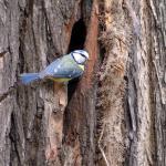 Biodiversiteit in Parkstad?